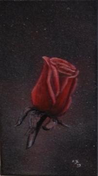 Rote Rose auf Schwarz