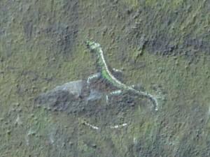 Eine kleine Eidechse; schon gesehen?